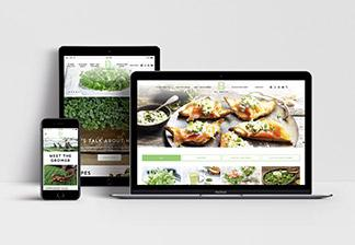 B Sow Healthy WordPress Website Design and Development