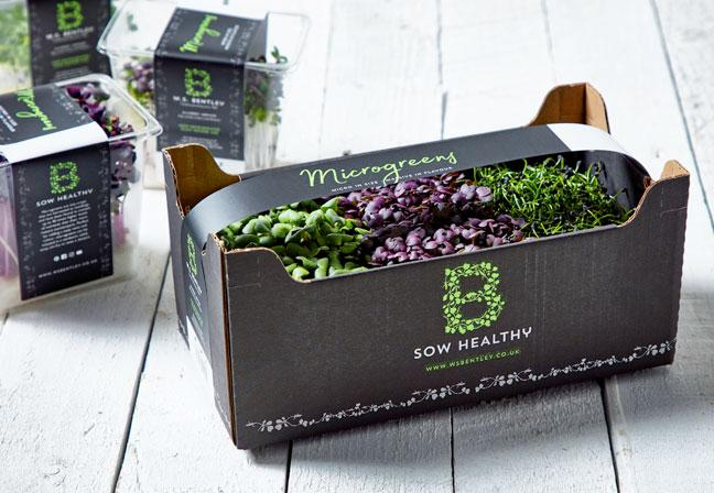 B Sow Healthy branding and packaging design